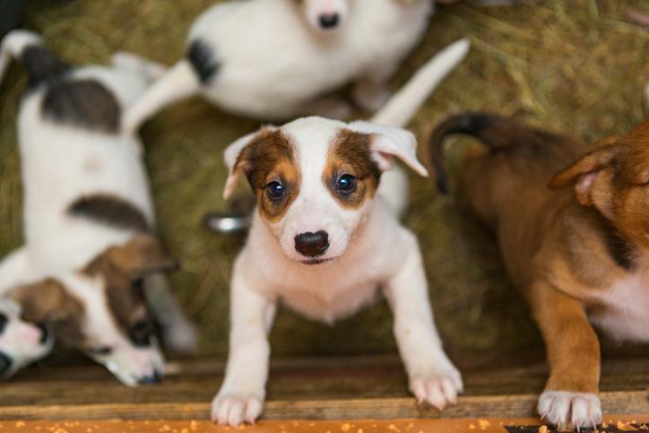Você sabia que pet shops devem ter câmeras de segurança instaladas?